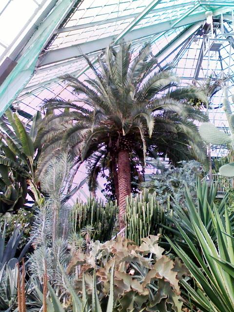 2009/02/22 市営熱帯植物園 (1)