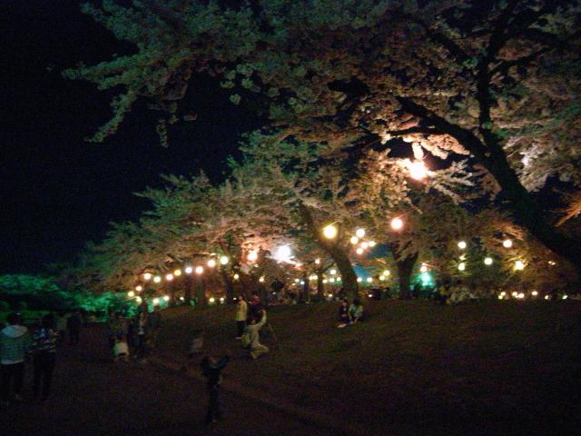 2009/05/04 ライトアップされた五稜郭公園の桜