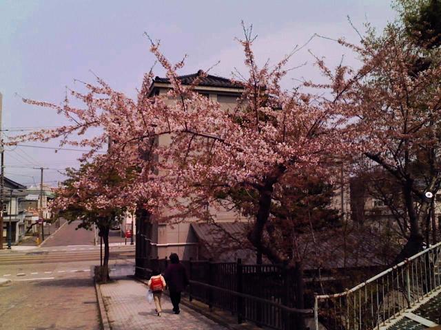 2008/04/23 大三坂の桜
