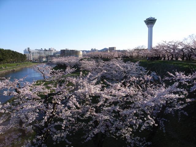 2010/05/09 五稜郭公園(3)
