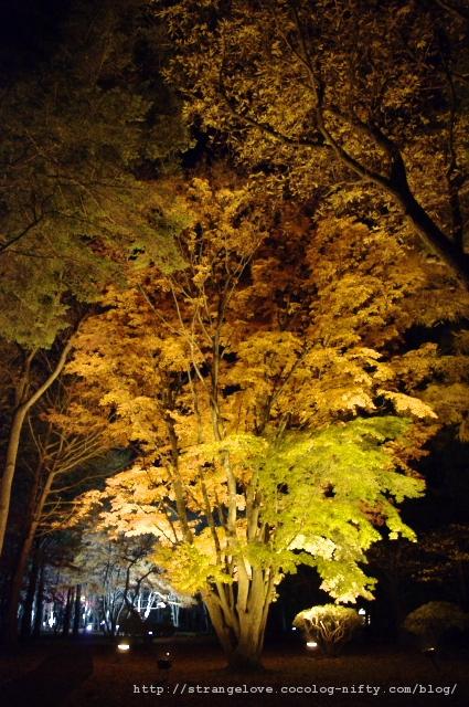 2010/11/13 香雪園の夜(1)