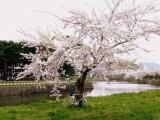 060513_goryokaku_02.jpg