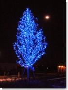 071224_moon_adn_tree.jpg