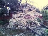 2007_0401 東郷記念館 前庭にて