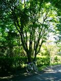 050703_shade_of_a_tree